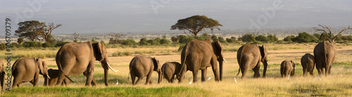 Spoed Foto op Canvas Afrika African elephants, Amboseli National Park, Kenya