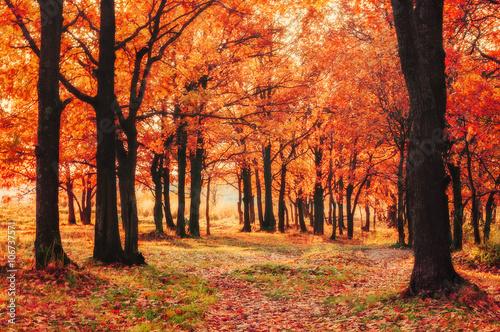 Aluminium Prints Autumn Autumn colored natural landscape with oak grove at sunset