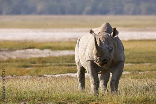 Spoed Foto op Canvas Neushoorn Beautiful black rhino