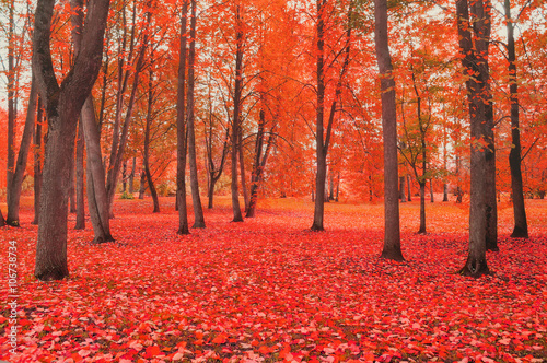 Recess Fitting Brick Autumn cloudy colorful landscape in foggy weather - autumn park with bare trees and fallen autumn leaves. Autumn landscape view.