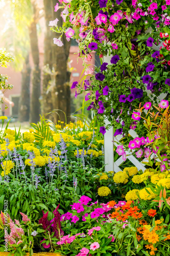 Fotobehang Tuin Flowers in the garden./ Landscaped flower garden with lots of colorful blooms with sun flare.