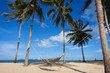 Coconut trees on blue-sky background at the beach