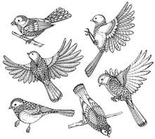 Ste Of Hand Drawn Ornate Birds.