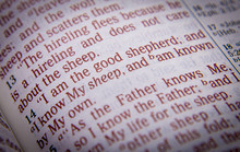 Bible Text - I Am The Good She...