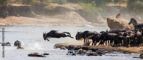 Fotografie, Obraz  Wildebeests are crossing Mara river