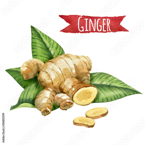 Fotografie, Obraz  Ginger root with green leaves, watercolor illustration with clipping path