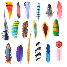 Collection Of Detailed Color Bird Feathers Set. Decoration Elements. Vector Illustration.