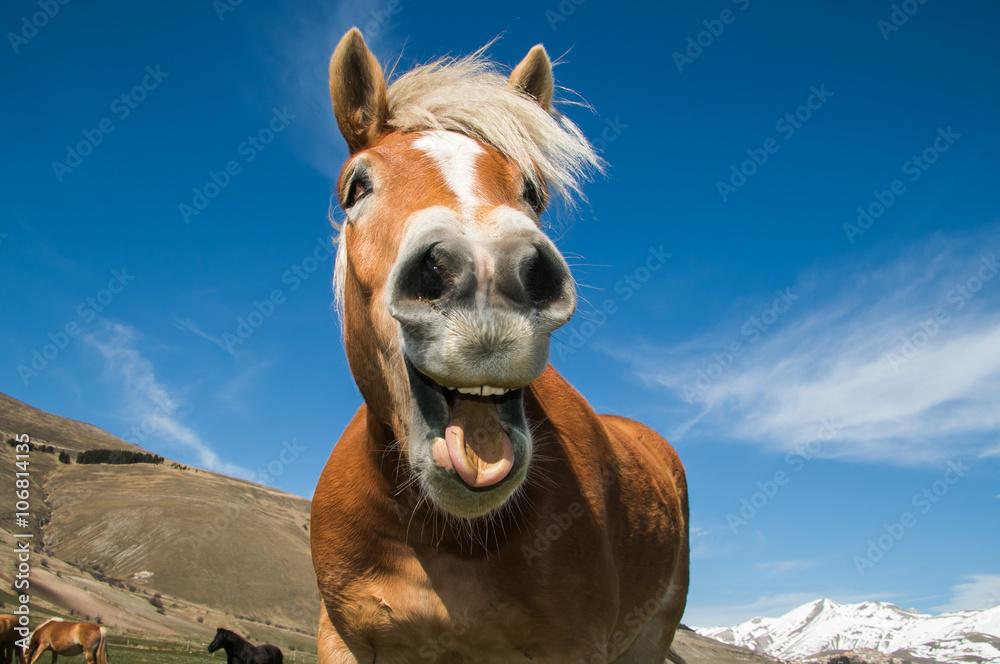 Fototapety, obrazy: Primo piano di un cavallo pazzo