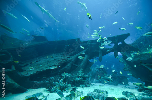 Poster Naufrage Underwater world - fishes swimming around shipwreck