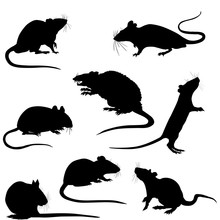 Silhouette Of A Rats Vector Clipart