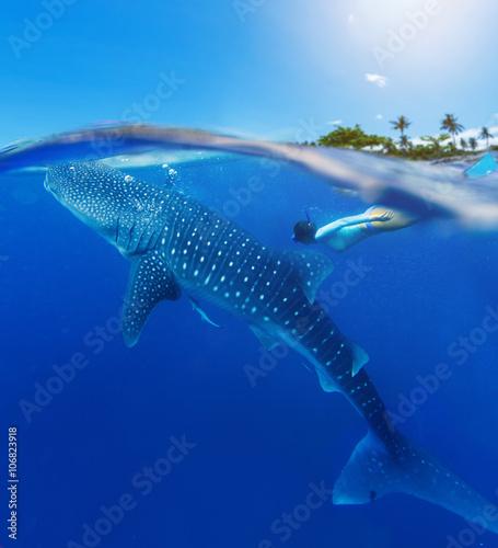 Plakat Kobieta snorkeling z wielorybim rekinem