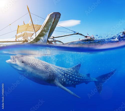 Plakat Podwodny strzał z rekina wielorybi