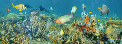 Poster Coral reefs Coral reef underwater panorama with colorful marine life composed by tropical fishes and sea sponges, Caribbean sea