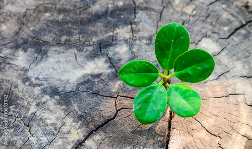 Fotografie, Obraz  New green leaves born on old tree, textured background , nature stock photo