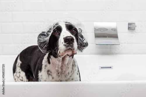 Vászonkép  Funny Dog Wearing Shower Cap in Tub