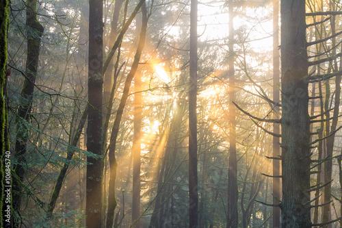 promienie-slonca-przebijajace-sie-przez-drzewa