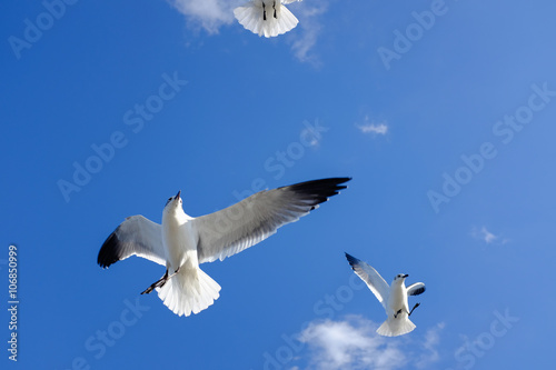 Valokuva  Freedom white Sea Bird in blue sky, may use as background