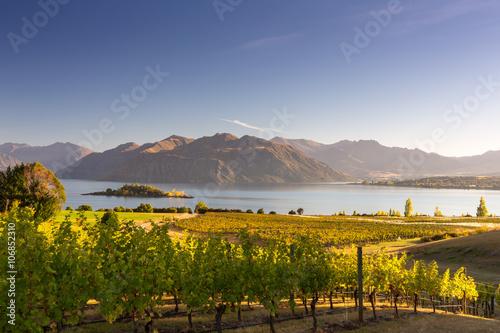 Photo  Morning on vineyard at Lake Wanaka, Otago, New Zealand
