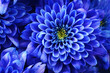 canvas print picture - Details of blue flower for background or texture