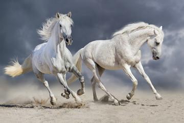 Couple of horse run against cloudy blue sky