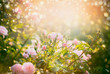 canvas print picture Pink pale roses bush over summer garden or park nature background. Roses garden, outdoor with sunshine and bokeh