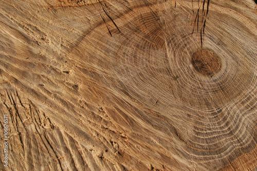 cut of a tree #106876571