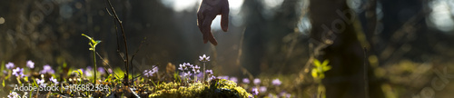 Spoed Foto op Canvas Natuur Panoramic image of beautiful nature with male hand pointing to a