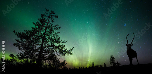 A beautiful green and red aurora dancing Canvas Print