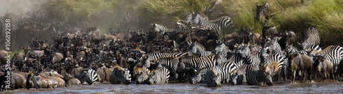 Poster Antilope Wildebeests are crossing Mara river. Great Migration. Kenya. Tanzania. Masai Mara National Park. An excellent illustration.