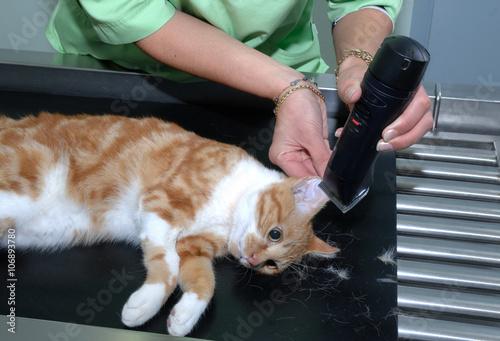 Foto  Vétérinaire; glucomètre; La prise de sang et l'analyse sanguine permettent d'étudier les composants du sang