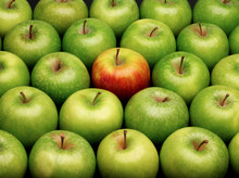Group Of Green Apples With One Red Apple
