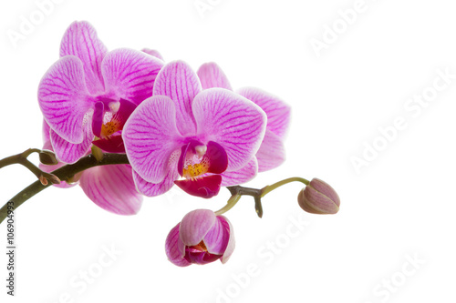 Foto op Canvas Orchidee Pink orchid flower.