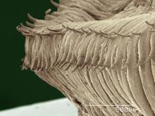 Coloured SEM Of Earthworm