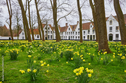 Printed kitchen splashbacks Bridges Yellow narcissus in Brugge Beguinage