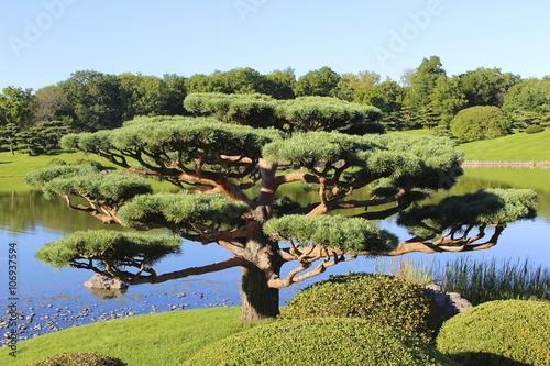 Bonsai: Chicago Botanic Garden, Chicago, IL