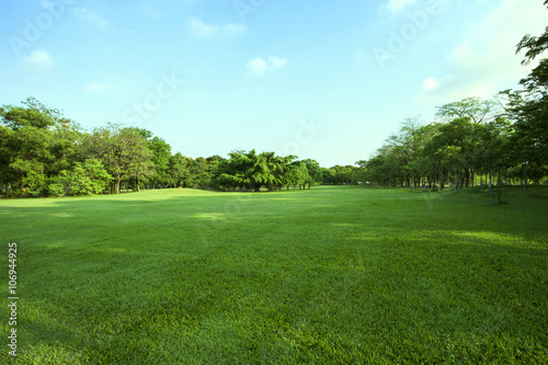 beautiful green grass field and fresh plant in vibrant meadow ag - 106944925