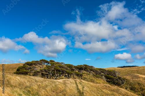 Obraz na plátne windswept tree and cloudy blue sky background