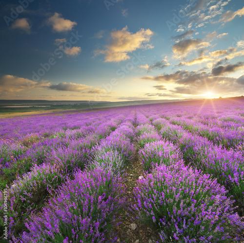 Naklejka na szafę Lawendowa łąka o wschodzie słońca