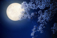 Beautiful Cherry Blossom (sakura Flowers) With Milky Way Star In Night Skies, Full Moon - Retro Style Artwork With Vintage Color Tone(Elements Of This Moon Image Furnished By NASA)