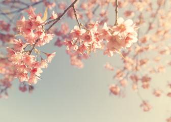 Panel Szklany Niebo Vintage cherry blossom - sakura flower. nature background