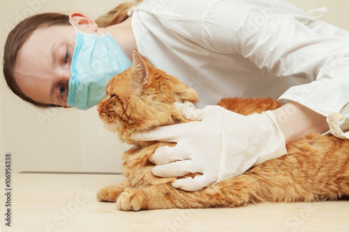 Veterinarian examining teeth of a red cat while doing checkup - 106956338