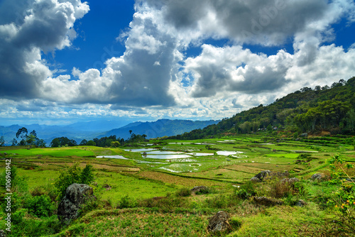 Foto auf Gartenposter Reisfelder Green rice field in Tana Toraja