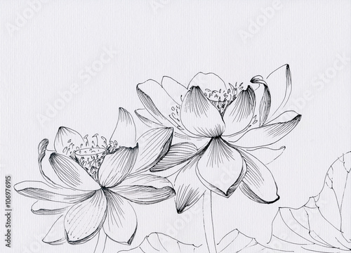 Garden Poster Lotus flower Lotus flower line art ink pen drawing. Original style.