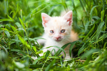 Young Cat In  Grass