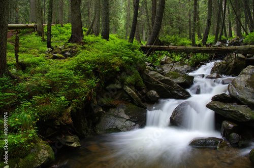 Foto op Aluminium Rivier Mountain river in forest.