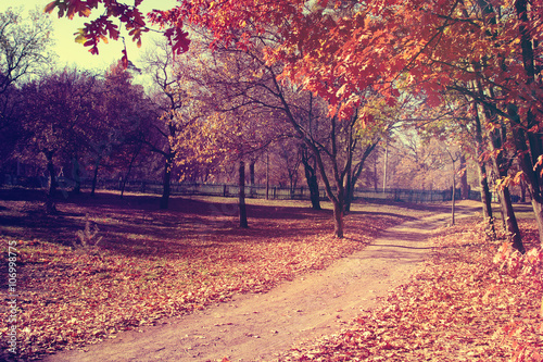Foto op Plexiglas Crimson Autumn in the park