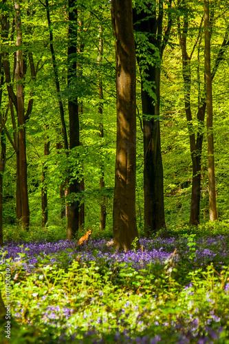 Foto op Canvas Bestsellers Mr Fox