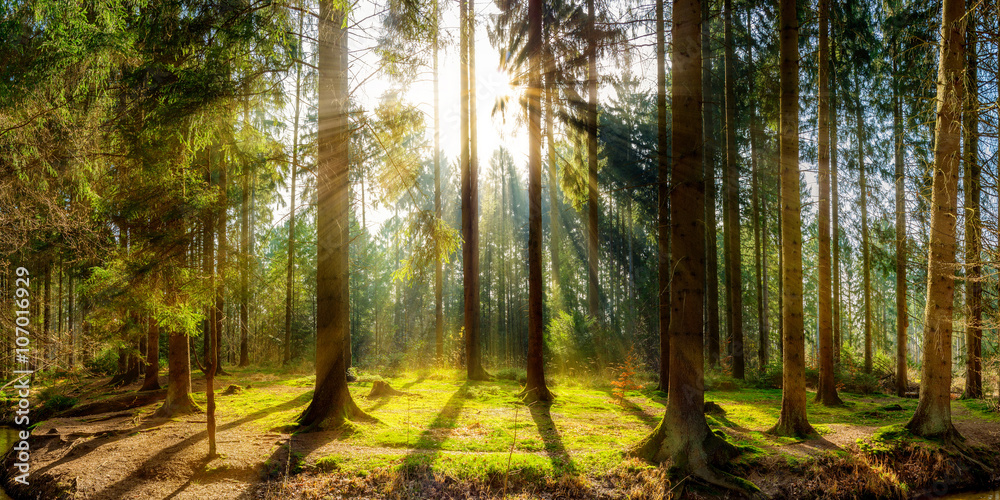 Photo  Sonnenaufgang auf einer Lichtung im Wald