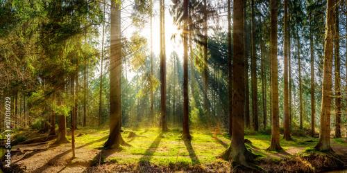 Sonnenaufgang auf einer Lichtung im Wald Принти на полотні