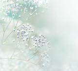 Pastel toned white flowers - 107045999